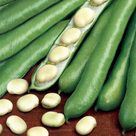 кого-то картинки овоща бобы выражает свои принципы