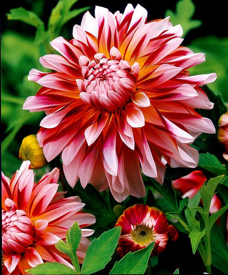 это популярные садовые цветы фото с названиями черного внедорожника застрелили