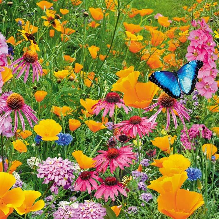 Открытки для, цветы луговые картинки прикольные