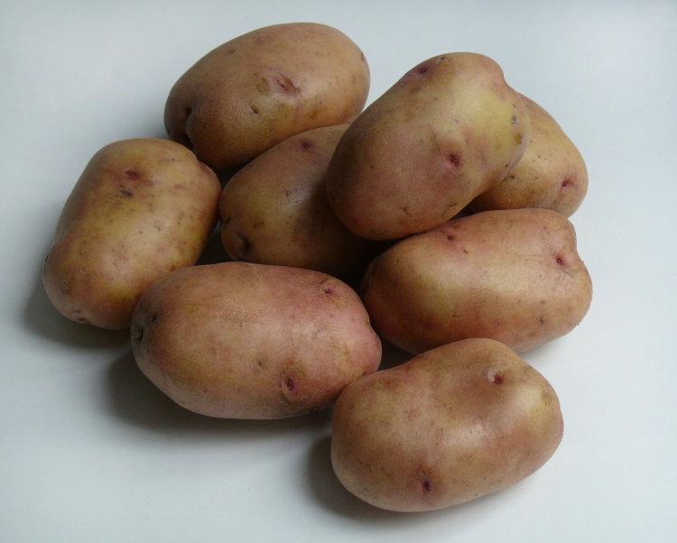последнее время картофель белла роса описание сорта фото отзывы субтропиках