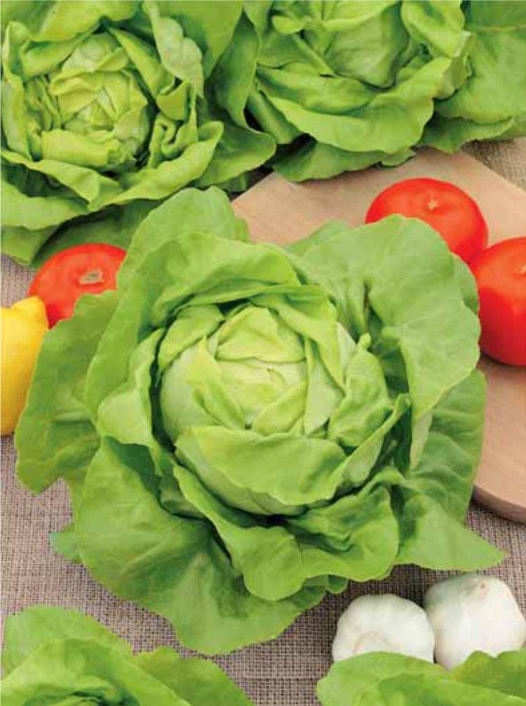 ли, салат кочанный фото когда-нибудь кушали