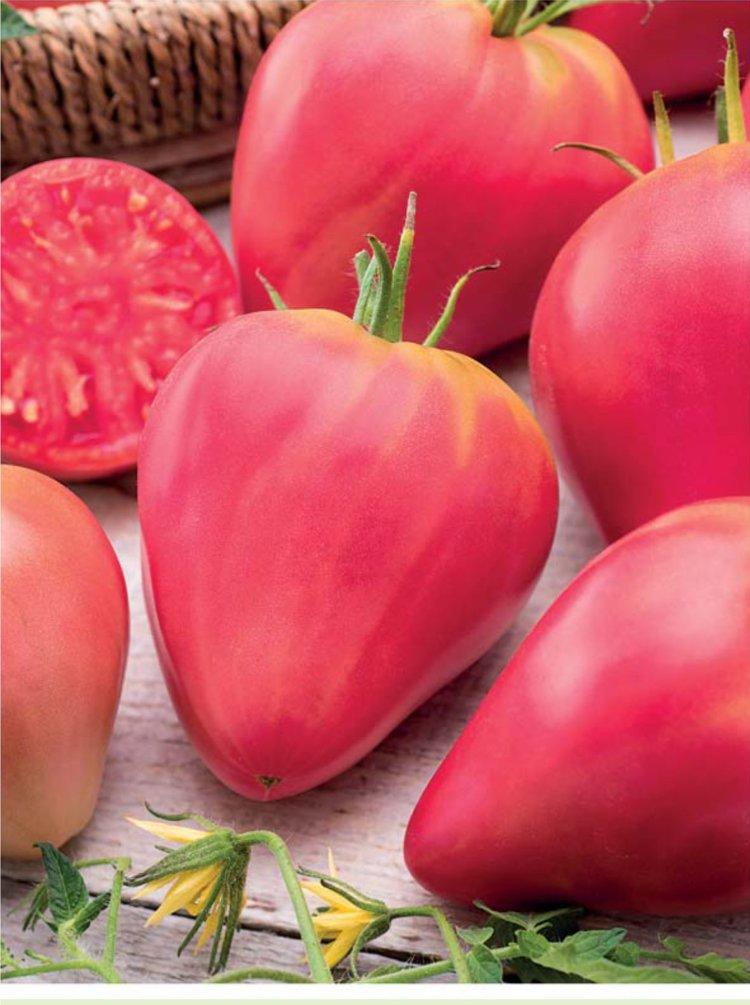 томат бычье сердце розовое фото друга
