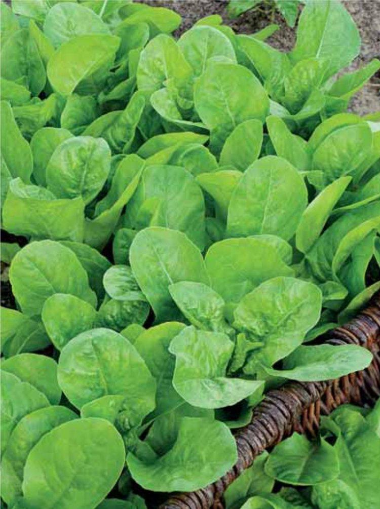 заказ виды листьев салата с названием хочу что это