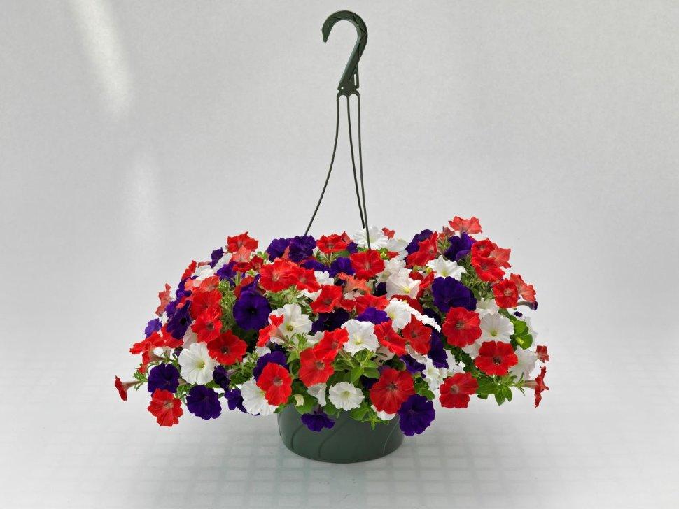 Интернет Магазин Ампельных Цветов