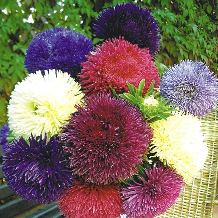 Каталог цветов для букетов с фото и названиями