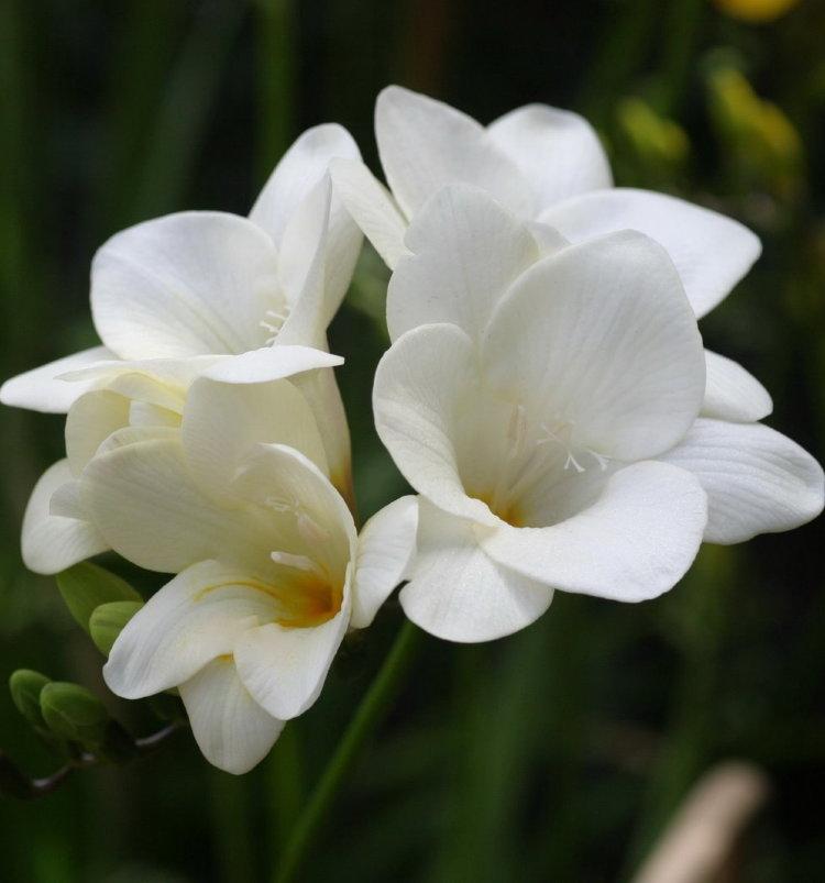 Какие многолетние цветы посадить на даче, чтобы цвели всё лето