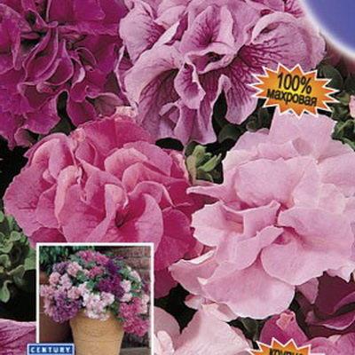 Цветы петунья купить в вао, доставка цветов южная осетия